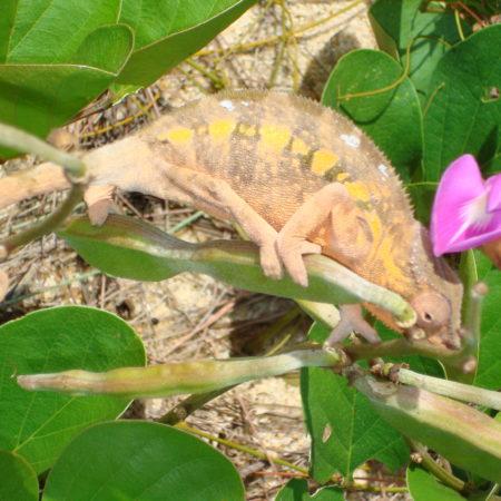 Antalaha, flore, habitat, cultures, région SAVA