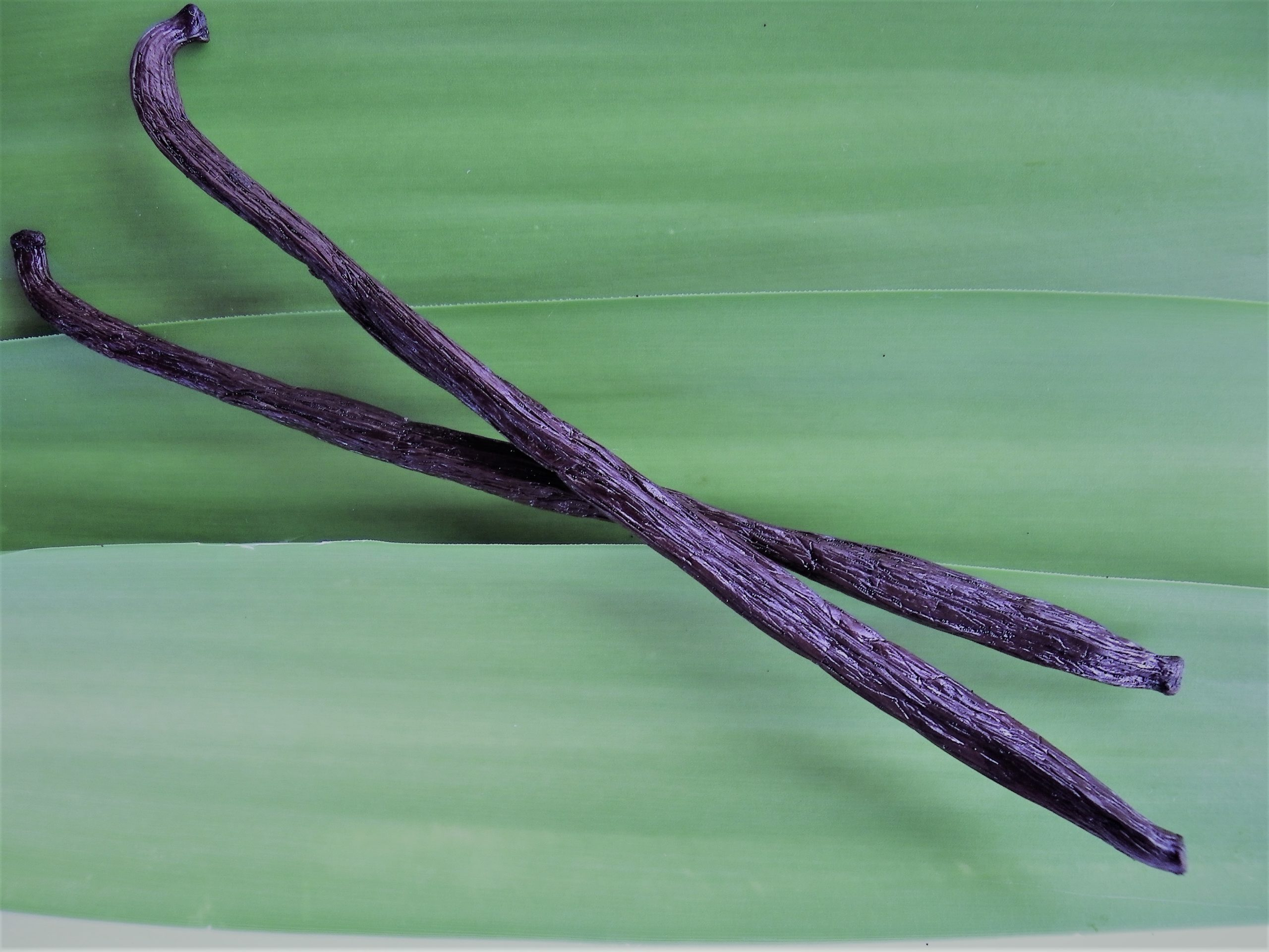 2 gousses de vanille Bourbon de Madagascar